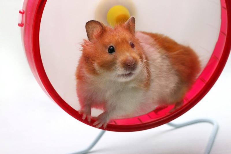 hamsterhjul